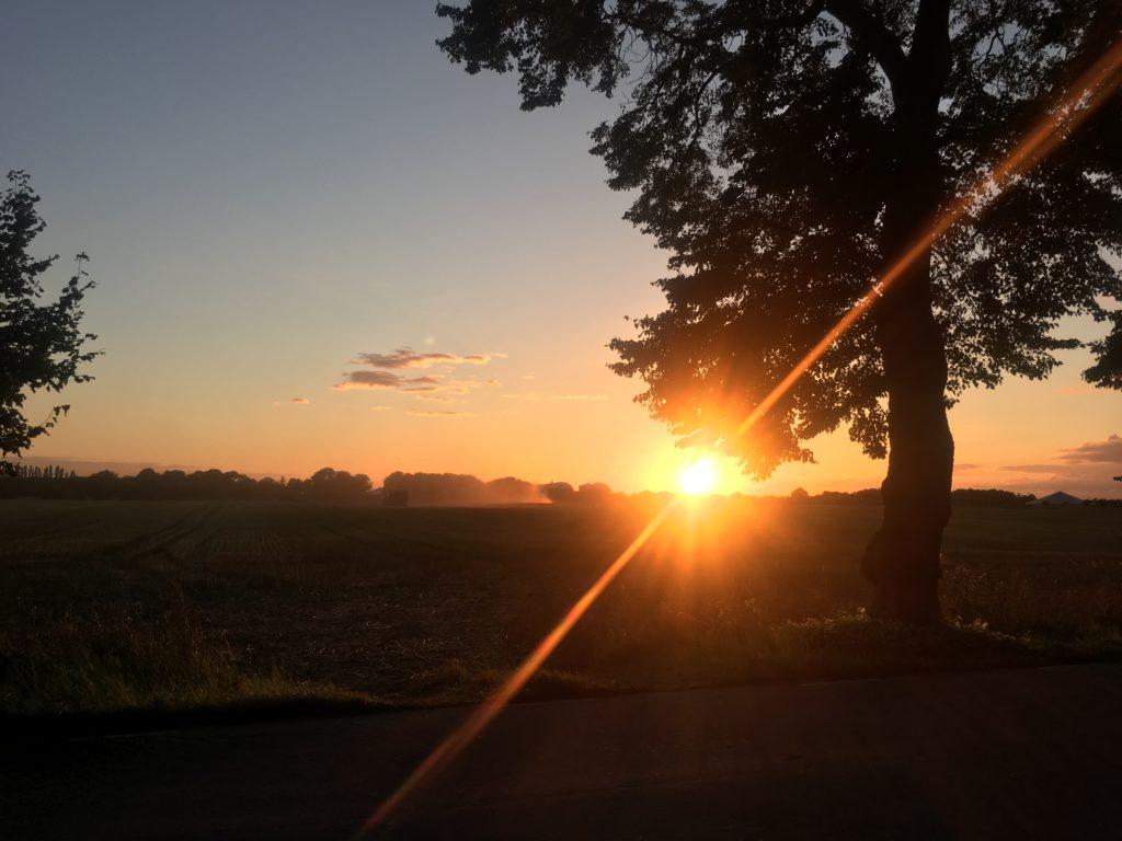 Solnedgång över fält
